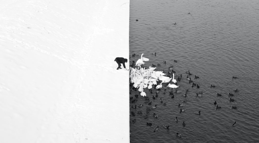 Marcin_Ryczek-A_Man_Feeding_Swans_in_the_Snow-1024x567